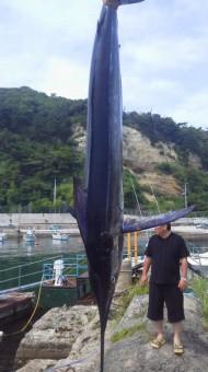 マカジキ50kg